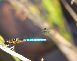 INSECTS 1